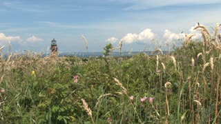 Lighthouse in Distance Above Tall Grass and Plants