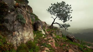 Lone Tree Growing Out of Mountainside 3
