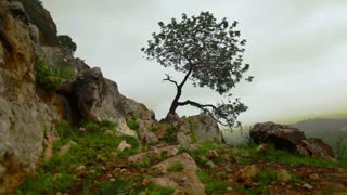 Lone Tree Growing Out of Mountainside 4