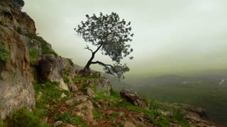Lone Tree Growing Out of Mountainside
