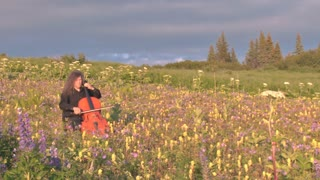 Long Haired Man Playing Cello in Bed of Wildflowers