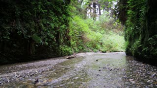 Look Down Stream in Fern Canyon