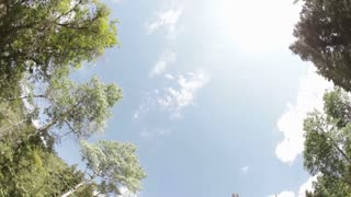 Looking Up at Sky Through Trees Fisheye Lens 4