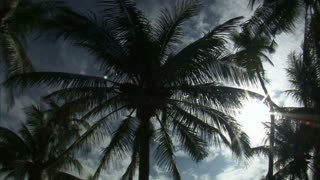 Looking Up at Sky with Palm Trees 2