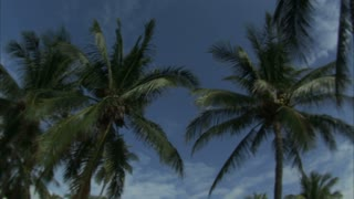 Looking Up at Sky with Palm Trees 4