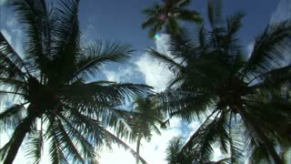 Looking Up at Sky with Palm Trees