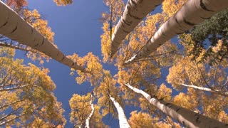 Looking Up View of Trees