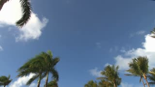 Low Angle Scenic Tropical Sky