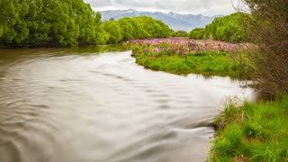 Lupine Flowers River New Zealand Landscape Time Lapse