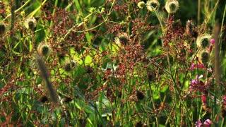 Lush Wildflowers
