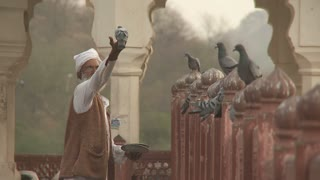 Man Feeding Pigeons at Amer Fort in India
