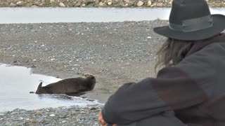 Man in Hat Watching Otter on the Beach