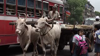 Man on Bull Cart in Busy Mumbai Traffic