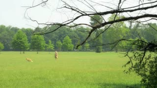 Man playing with dog in a meadow