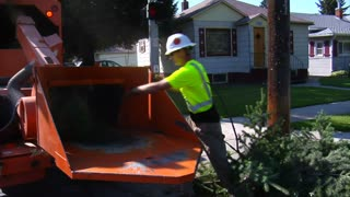 Man Throws Tree Branches Into Grinder