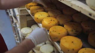 manufacture of cheese