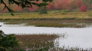 Marshy River in Autumn