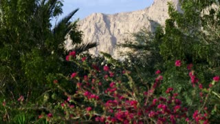 Mediterranean Flowering Bushes