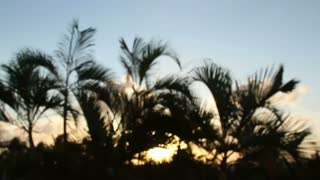 Mexico Palm Tree Sunlight