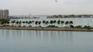 Miami Palm Tree Causeway