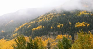 Mist blowing over fall foliage and golden Aspen trees