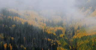 Mist floating above forest of fall foliage Aspen trees and pine trees