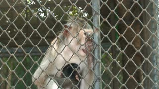 Monkey In Wildlife Park