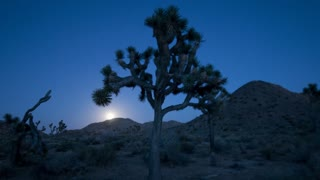 Moon Rising Joshua Tree Silhouette
