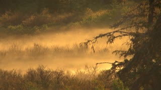 Morning Mist Over Brush