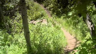 Mountain Bikers Take Tight Turn On Wooded Trail