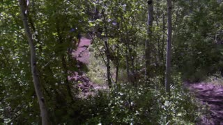 Mountain Bikers Zoom Up And Down Wooded Trail