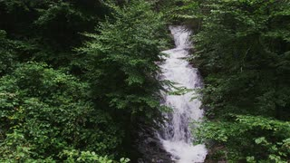 Mountain Flora Perfectly Frames Rushing Waterfall, Blue Ridge Mountains