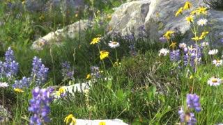 Mountainside Flowers 2
