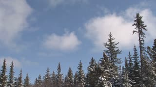 Moving Clouds Over Snowy Tree Tops