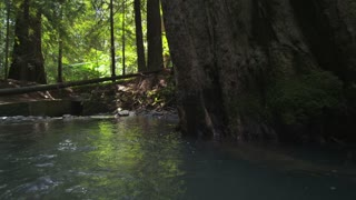 Moving Upstream Along Creek in Redwood Forest
