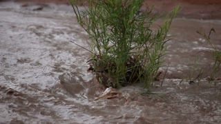 Muddy River Water Gushing Around Small Plant