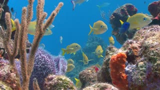 Multicolored Reef With Yellow Fish