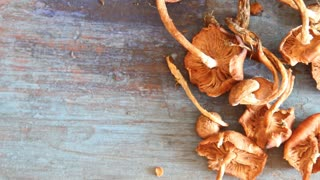 mushrooms on a blue table