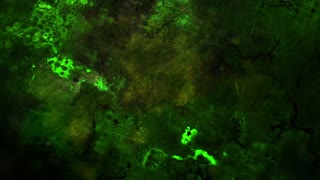 Mysterious Eerie Green Abstract Background