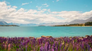 New Zealand Flowers Landscape Time Lapse