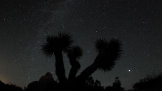 Night Sky Stars Overhead Joshua Tree