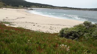 Ocean Beach With Ice Plant Vegetation