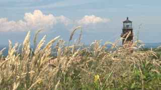Ocean Lighthouse Above Swaying Cat Tails