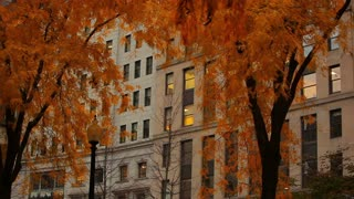 Orange Autumn Trees by City Building
