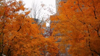 Orange Autumn Trees in City