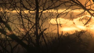 Orange Sunset Through Winter Branches
