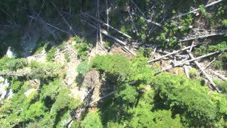 Overhead View Of Knocked Down Trees