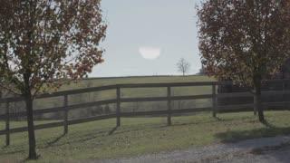 Overlooking Field Between Two Trees 1