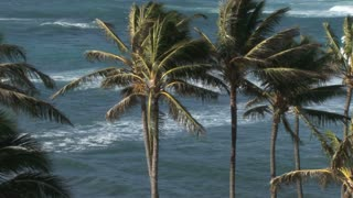 Pacific Ocean through Palm Trees 2