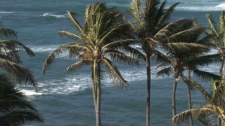 Pacific Ocean through Palm Trees